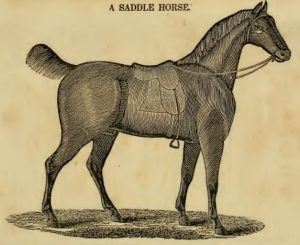 Saddle Horse Drawing, 5-24-2016
